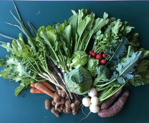 野菜セット大